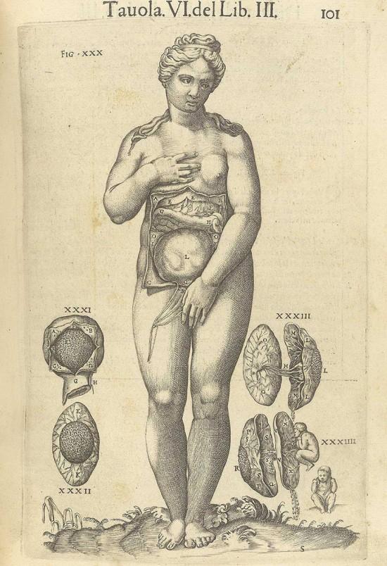 Valverde de Amusco, Juan 'Anatomia del corpo humano' 1560