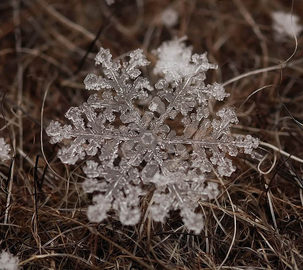Fotos macro de flocos de neve