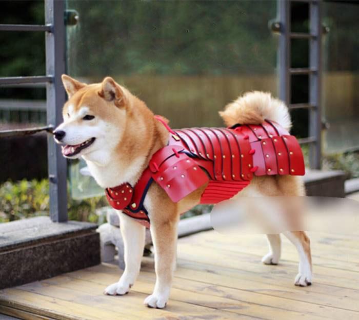 Armaduras de Samurai para cachorros e gatos